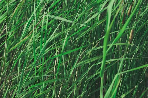 Plantas em cores verdes desbotadas. Foto Premium