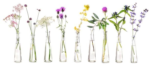 Plantas em tubo de ensaio Foto Premium