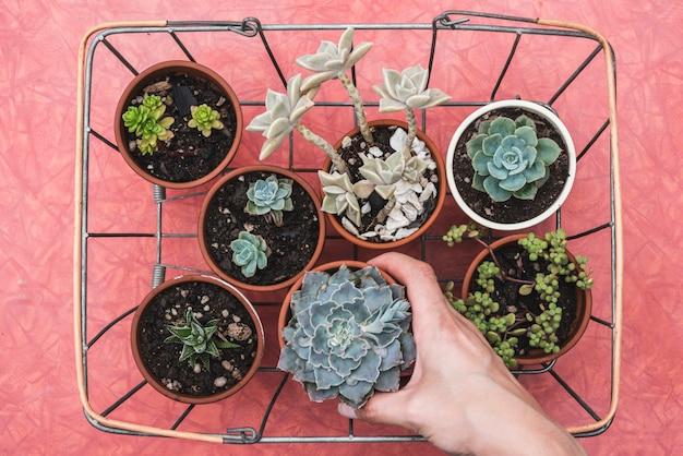 Plantas em uma cesta de metal Foto gratuita