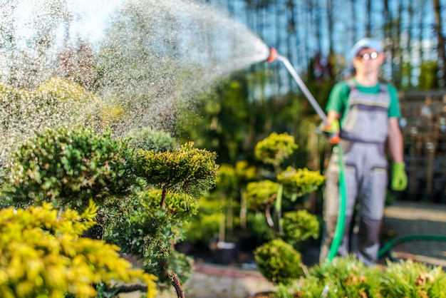 Plantas molhando do jardineiro na loja do jardim. Foto Premium