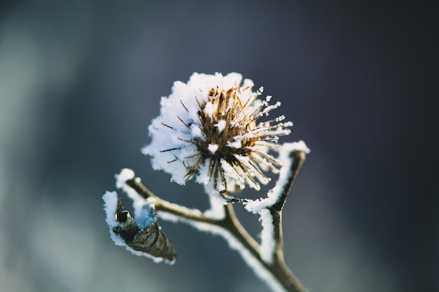 Plantas no inverno coberto de geada e neve Foto Premium