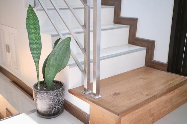 Plantas purificadoras de ar samse-vieria folha, sansevieria masoniana chahin, asparagaceae em um cimento preto moderno no canto da escada ou escada Foto Premium