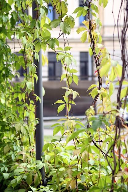 Plantas que crescem nas paredes Foto gratuita