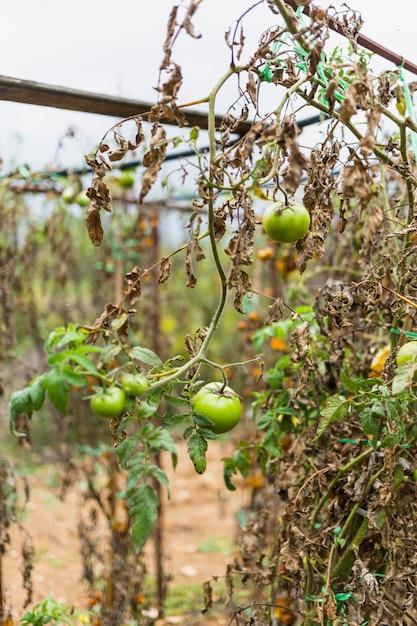 Plantas secas Foto gratuita