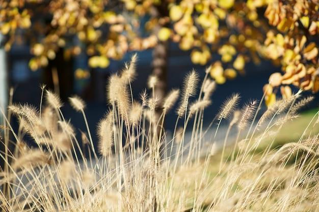 Plantas selvagens do outono com tons amarelos e alaranjados. plano de fundo para criações. Foto Premium