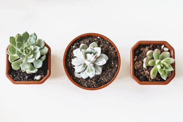 Plantas suculentas em vasos bonitas em uma vista de mesa branca Foto Premium
