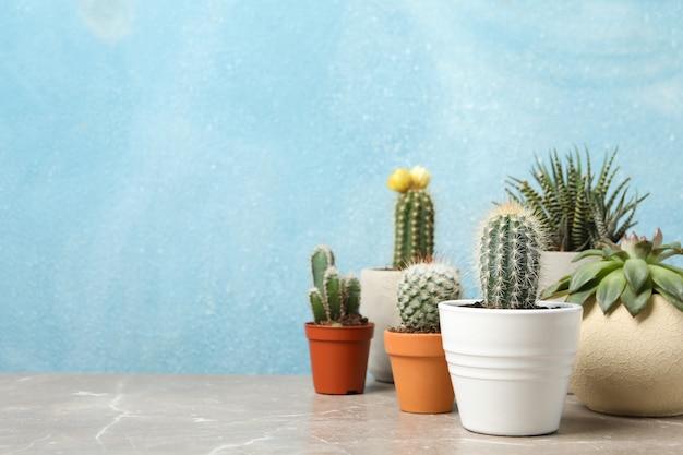 Plantas suculentas na mesa cinza. plantas de casa Foto Premium