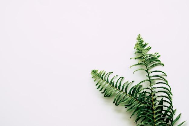 Plantas tropicais em branco Foto Premium