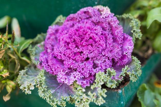 Plantas verdes em vasos em lindo vaso ao ar livre Foto Premium