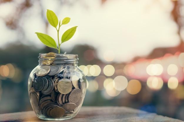 Plante em moedas da pilha na garrafa, no conceito crescente do dinheiro e no sucesso do objetivo. Foto Premium