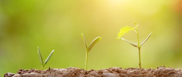 Plantio agricultura, semeando, crescendo Foto Premium