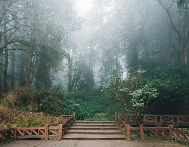 Plataforma de madeira com árvores de cedro e névoa na floresta em alishan national forest recreation area no inverno no condado de chiayi, distrito de alishan, taiwan. Foto Premium