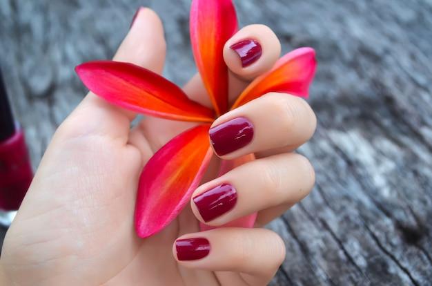 Plumeria rosa flor na mão feminina com bela manicure Foto Premium