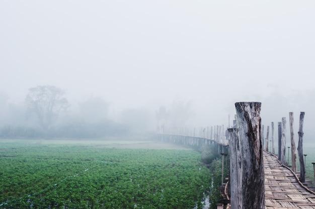 Ponte de bambu sobre o campo vegetal entre a névoa na zona rural da tailândia Foto Premium