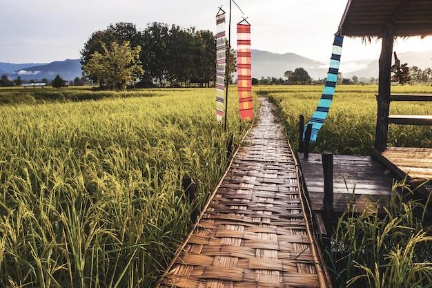 Ponte de madeira ao lado da fazenda verde em nan Foto Premium