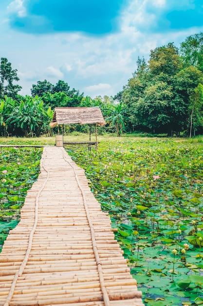Ponte de madeira e cabana na lagoa de lótus. Foto Premium