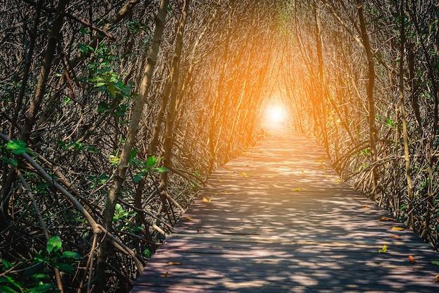 Ponte de madeira na floresta de mangue betaween Foto Premium