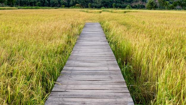 Ponte de madeira no campo de arroz na zona rural Foto Premium