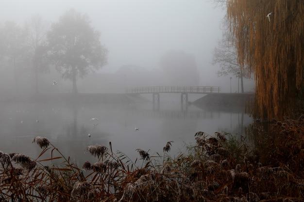 Ponte de madeira no parque coberta por uma densa névoa Foto gratuita
