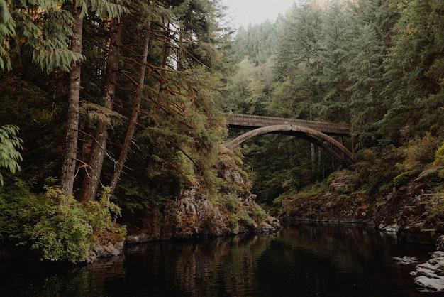 Ponte de madeira sobre o rio em uma floresta cercada por árvores e arbustos Foto gratuita