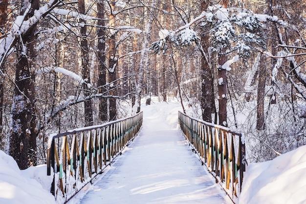 Ponte em uma floresta de pinheiros no inverno Foto Premium