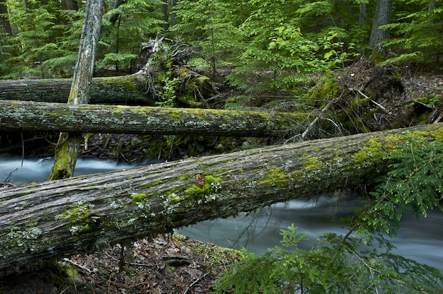 Pontes de madeira natural Foto gratuita