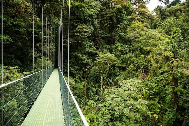 Pontes suspensas na floresta tropical verde na costa rica Foto gratuita