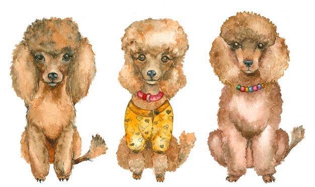 Poodles desenhados à mão Foto Premium