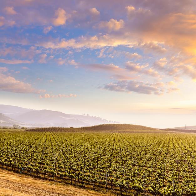 Por do sol do campo do vinhedo de califórnia nos eu Foto Premium