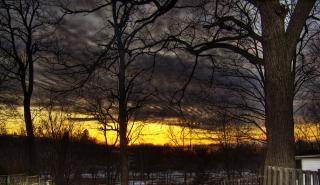 Por do sol interior, madeiras Foto gratuita
