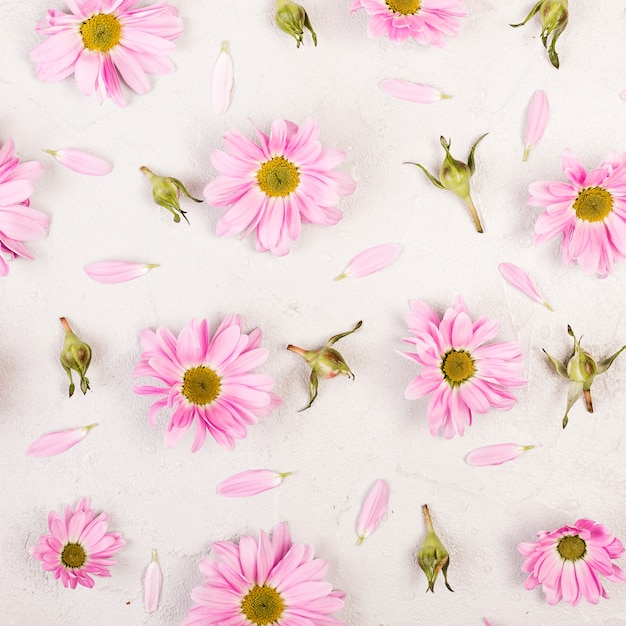 Pôr do sol plana margarida rosa flores e pétalas Foto gratuita