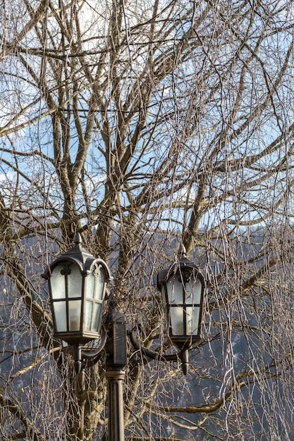 Poste de luz vintage ao ar livre com filiais no fundo Foto Premium