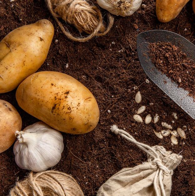 Postura plana de alho e batatas Foto gratuita