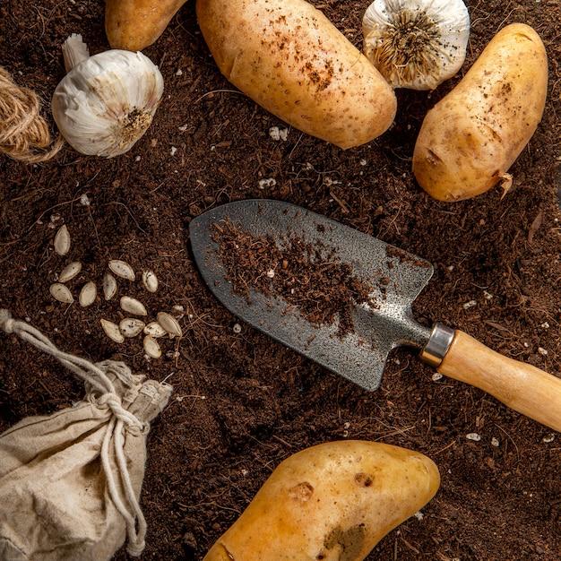 Postura plana de batatas com alho e ferramenta de jardim Foto gratuita