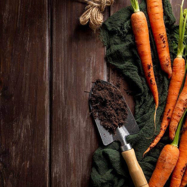 Postura plana de cenoura com ferramenta de jardim Foto gratuita