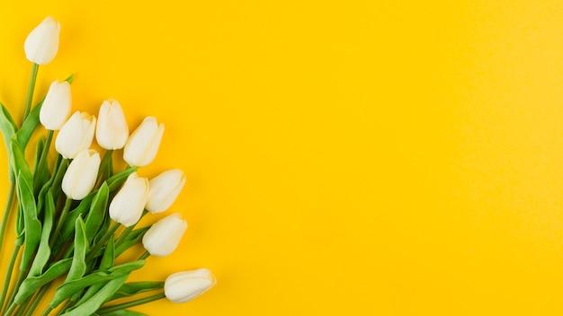 Postura plana de lindas tulipas para chá de bebê Foto gratuita