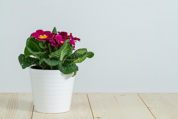 Pot bonita com flores roxas Foto gratuita