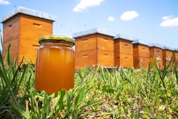 Pote de mel e colmeias no prado na primavera Foto gratuita