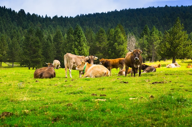 Poucas vacas no prado Foto gratuita