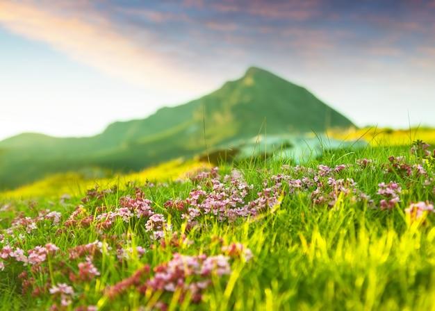 Prado das montanhas nos pirinéus Foto gratuita