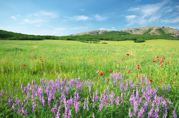 Prado primavera no prado. Foto Premium