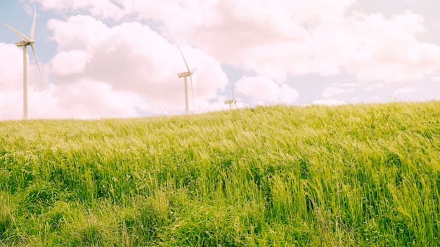 Prado verde com céu nublado Foto gratuita