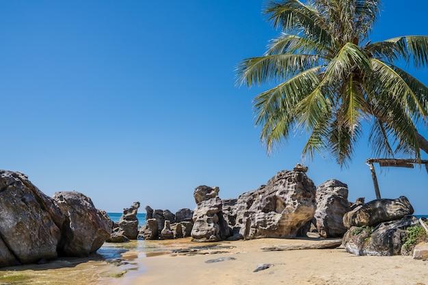 Praia com pedras e palmeira Foto gratuita