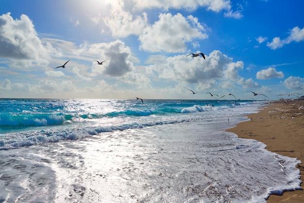 Praia da ilha de cantor em palm beach florida us Foto Premium