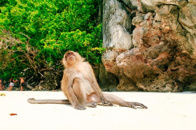 Praia de macaco, ilhas phi phi, tailândia Foto Premium