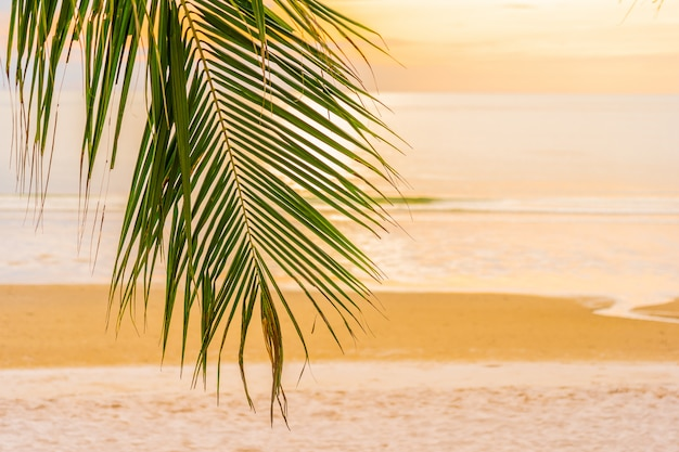 Praia do mar lindo oceano com palmeira na hora do nascer do sol para férias Foto gratuita