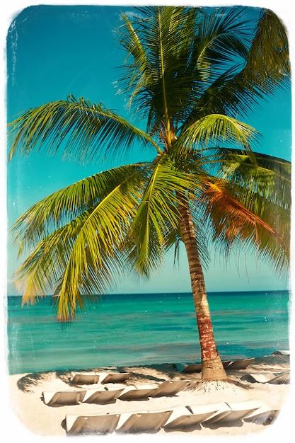 Praia tropical do verão com fundo de mar e céu em folha de palmeira ramo de árvore Foto gratuita