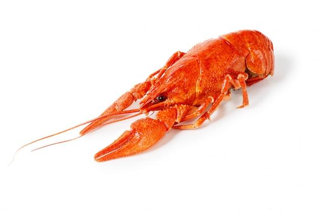 Prato de frutos do mar com lagostim vermelho cozido Foto Premium