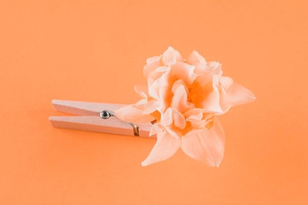 Prendedor de madeira e flor em fundo de pêssego Foto gratuita
