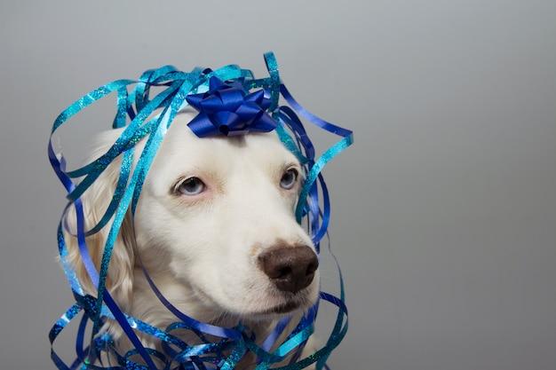 Presente de festa de aniversário de cachorro coberto com serpentina azul Foto Premium